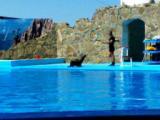 дельфинарий в ейске фото