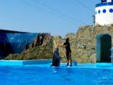 ейский дельфинарий фото