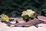 фото океанариума в ейске